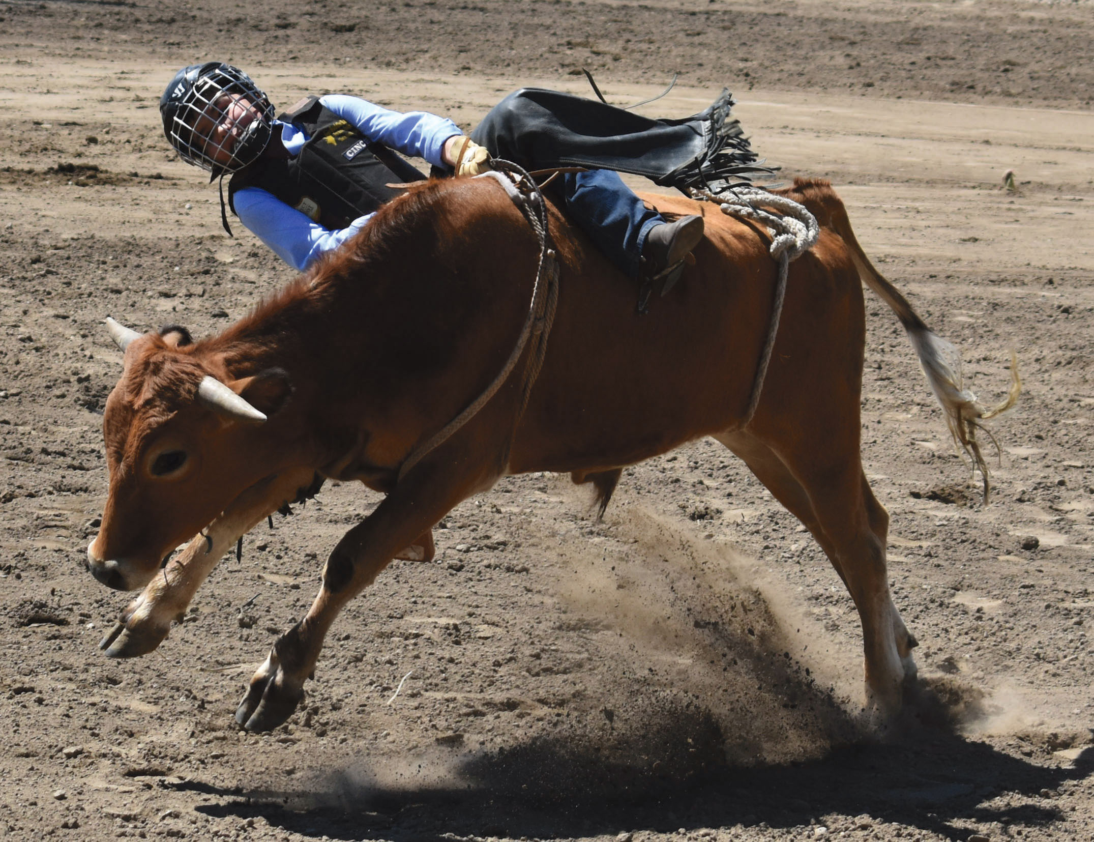 A cowgirl desperately holds onto her steer riding rope for dear life as a bucking steer attempts to throw her off. She was able to hold on for a few more seconds before the steer bucked her off and knocked the wind out of her.